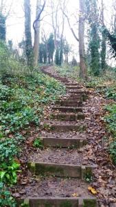 more-steps