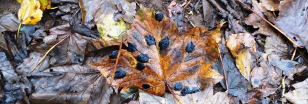 moth-leaf