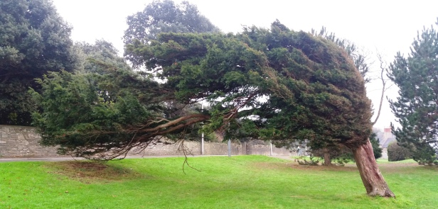 windy-tree