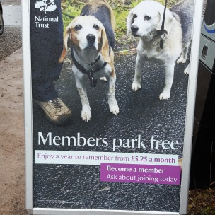 Membership for dogs?