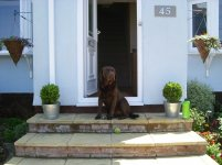 Bailey, lokking rather proud of his front door!