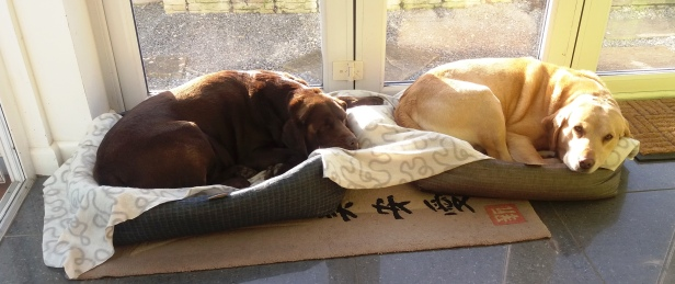 dogs-in-beds