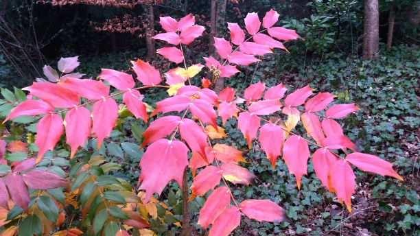Vibrant red leaves