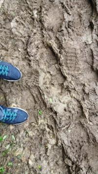 Muddy...